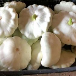 Zucchina bianca a disco 1Kg