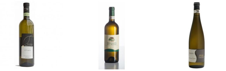 Piedmontese white wines | Katuma